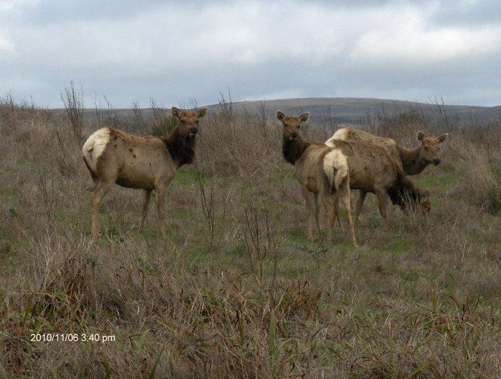 Elk Photo